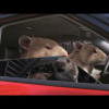 Рекламный ролик Kia Soul с хомяками