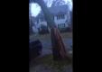 Шторм Сэнди выкарчевывает деревья, которые разбивают автомобили