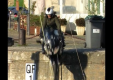 Французский журналист попал в аварию на мотоцикле на пристани