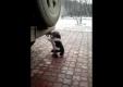 Кошка дышит с выхлопной трубы
