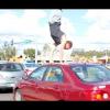 Пешеход — паркурщик на дороге