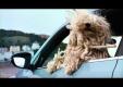 VW использует 36 собак, чтобы рекламировать свой весь модельный ряд