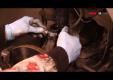 Замена передних стоек амортизаторов Renault Megan 2